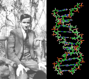 Max Delbrück and his team discovered the mechanism of gene replication.