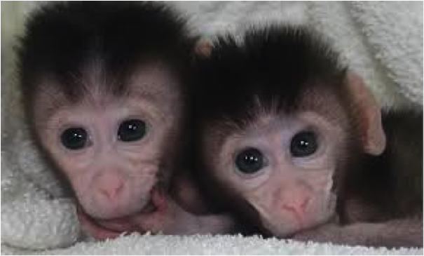 These set of twins were born with targeted deletions in their DNA as a result of Cas9.