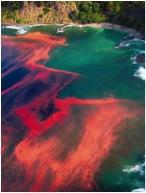 A nontoxic algal bloom off the coast of New Zealand. (Photo by M. Godfrey)